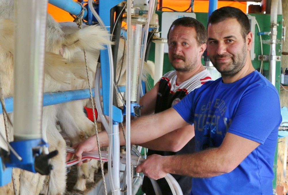 Chemist Cansu Cansunal (L) and food engineer Ozan Ektik (R) working at a dairy and goat farm that they established with the help of a bank loan in Balu0131kesir.