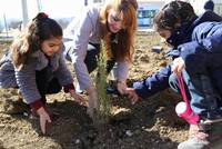 Turkey plans for record-breaking day in tree planting