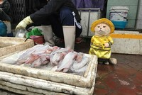 Meet 'Dog': Vietnam's cutest feline fish vendor