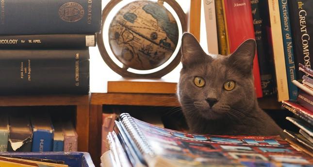 قطة أنقذها جندي تركي من الباب تحتضنها إحدى مكتبات إسطنبول