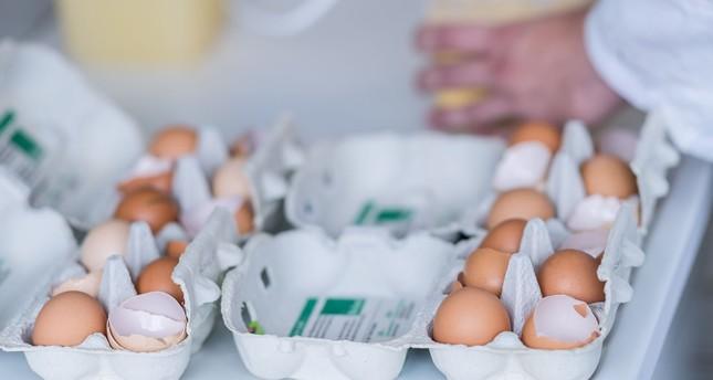 Belgium kept contaminated eggs secret for one month