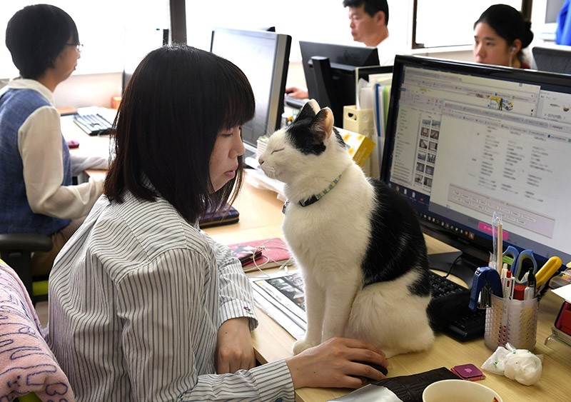 Workaholic Japan is known for long office hours and stressed out employees, but one company claims to have a cure: Cats. AFP Photo