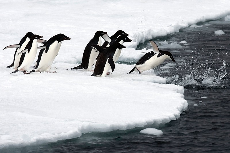 This hand out picture taken by John B.Weller and released by the Pew Charitable Trusts on April 25, 2017 shows penguins seen in Antartica. (AFP Photo)