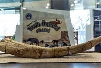 7.5 million-year-old fossils exhibited in Kayseri