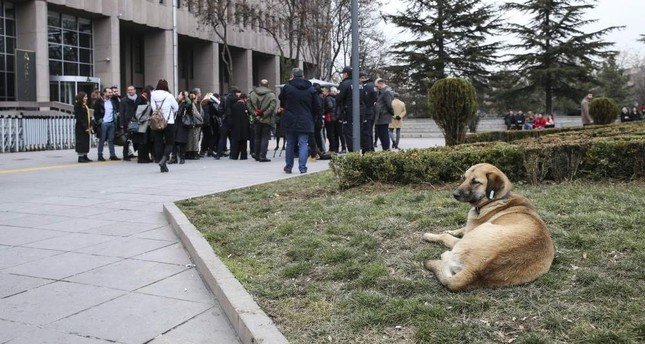 A dog rests outside the courthouse as animal rights activists gather for a statement after the trial, Ankara, Jan. 27, 2020. AA Photo