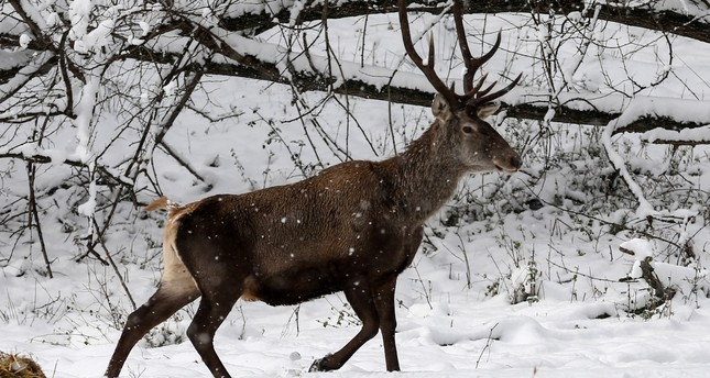 Rangers keep an eye on Istanbul's wildlife during winter