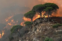 2 Italian students fined 27 million euros after BBQ caused forest fire
