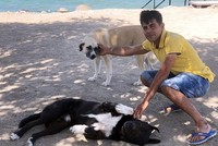 Heroic stray dogs save 74-year-old Turkish man from drowning