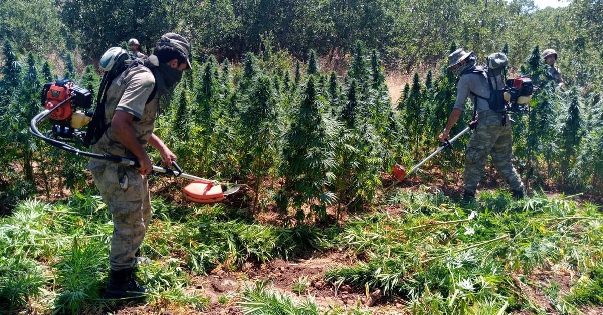Soldiers destroy cannabis plants found in a field in Diyarbaku0131r, July 31, 2019.