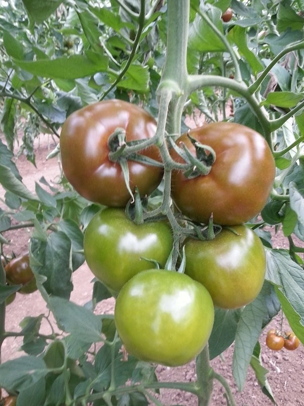 u201cEtou2019ou201d tomatoes are very long-lasting, just like the 36-years-old Cameroonian who has had a long successful career.