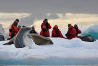 Antarctica no longer Earth's purest place