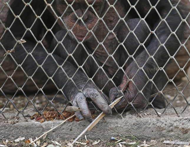 Angel's determination to reach food attracts attention in Antalya Zoo
