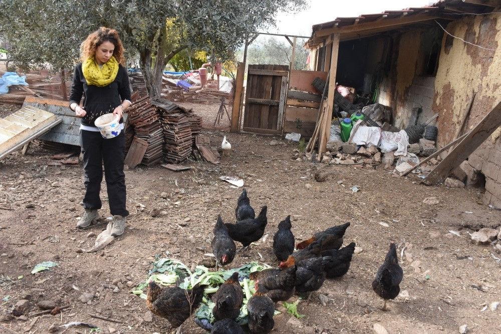 One of the volunteers at the farm feeds the chickens as a part of her daily duties.