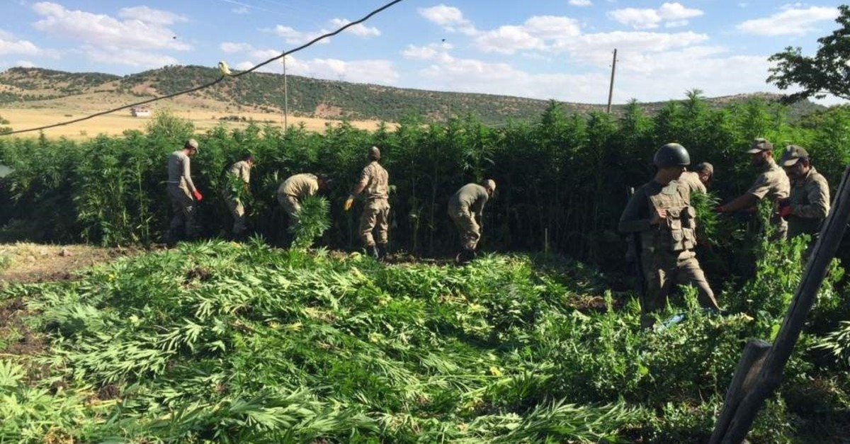 Soldiers collect cannabis plants for demolition after a counter-narcotics operation in this 2017 photo from southeastern province of Diyarbak?r (AA Photo)