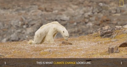 Nat Geo admits lying to readers about dying polar bear