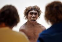 «Réduction de la fécondité derrière l'extinction du Néandertalien»