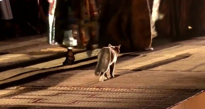 The real 'catwalk': Cat struts down Dior runway in Marrakech