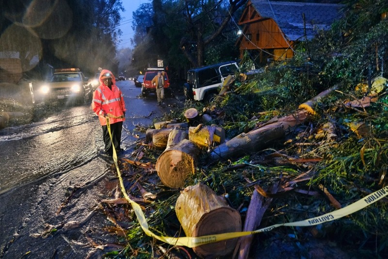 Department of Water and Power employees work in the pouring rain to clear a fallen tree from a road in the Hollywood hills in Los Angeles, Thursday, Jan. 17, 2019 (AP Photo)