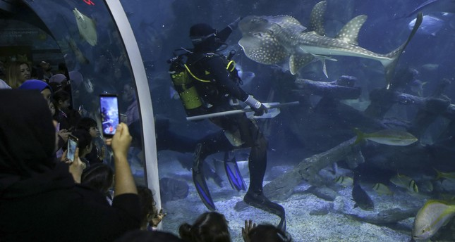 Challenging profession: Aquarists at huge aquariums