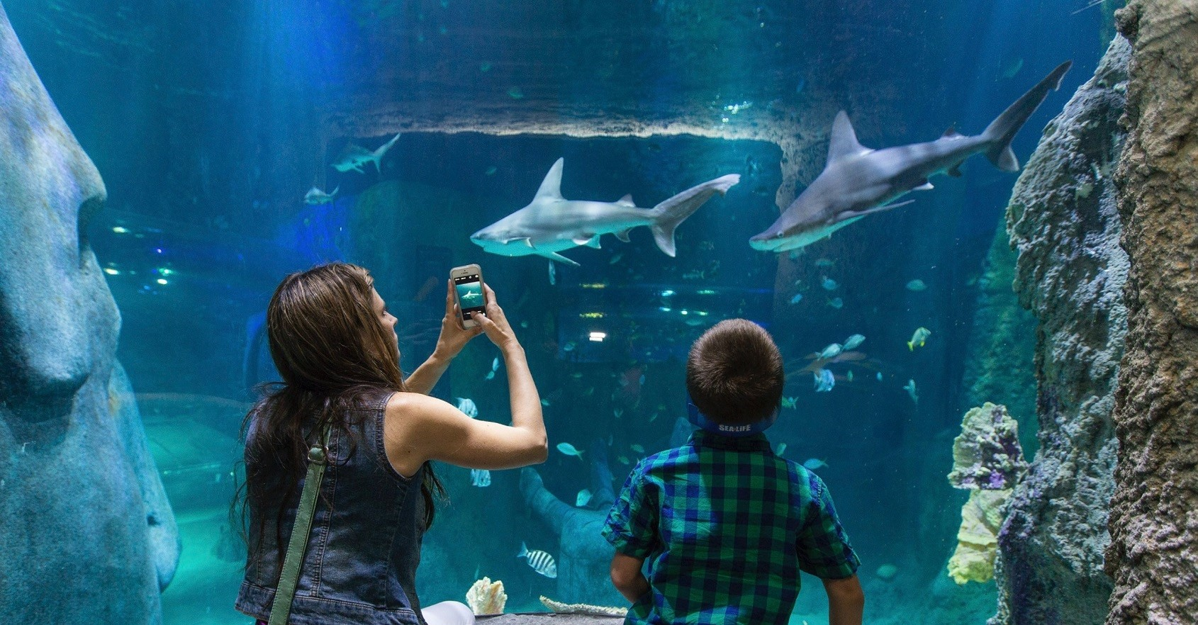 SEA LIFE boasts the largest shark family in Europe along with more than 15,000 other sea creatures.