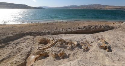 Fossile de girafe de 7,5 millions d'années découvert à Kayseri