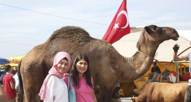 الجمل حيدر يثير فضول أهالي طرابزون التركية!