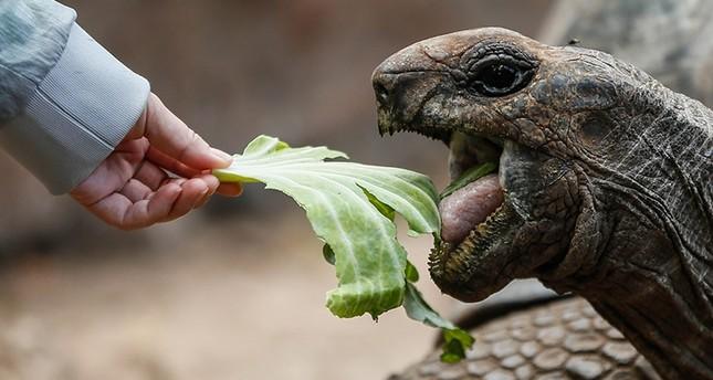 إقبال كيبر من السياح على زيارة جزيرة السلاحف العملاقة بزنجبار