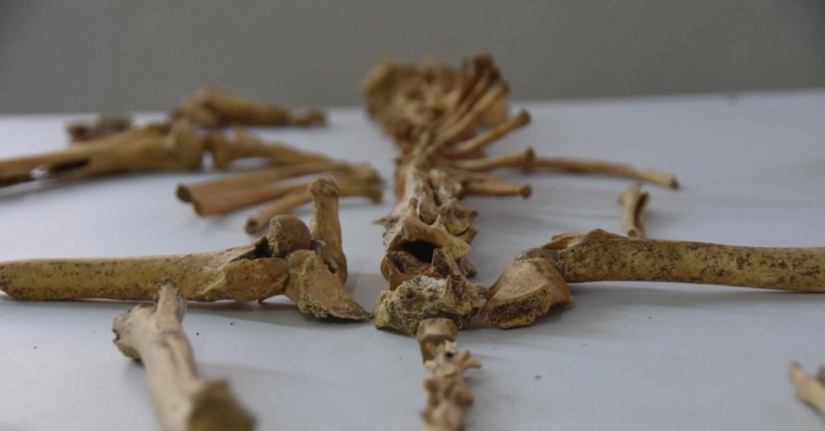 Bones discovered during excavations at Ku00fcllu00fcoba mound displayed (DHA Photo)