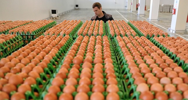 In this Friday, Aug. 11, 2017 file photo, a man transports eggs at a processing plant in Gaesti, southern Romania. (AP Photo)