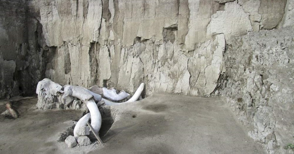 In this undated photo released by Mexico's National Institute of Anthropology and History, INAH, mammoth bones lay at an excavation site in Tultepec, just north of Mexico City. Mexican anthropologists say they found two human-built pits dug 15,000 years ago to trap mammoths. (Mexico's National Institute of Anthropology and History via AP)