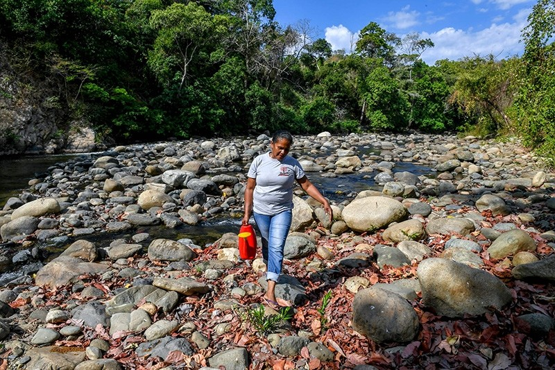 A local farmer carries water from the Jerez river, to water Guaimaro (Brosimum alicastrum) trees at a small farm in Dibulla, La Guajira department, Colombia (AFP Photo)