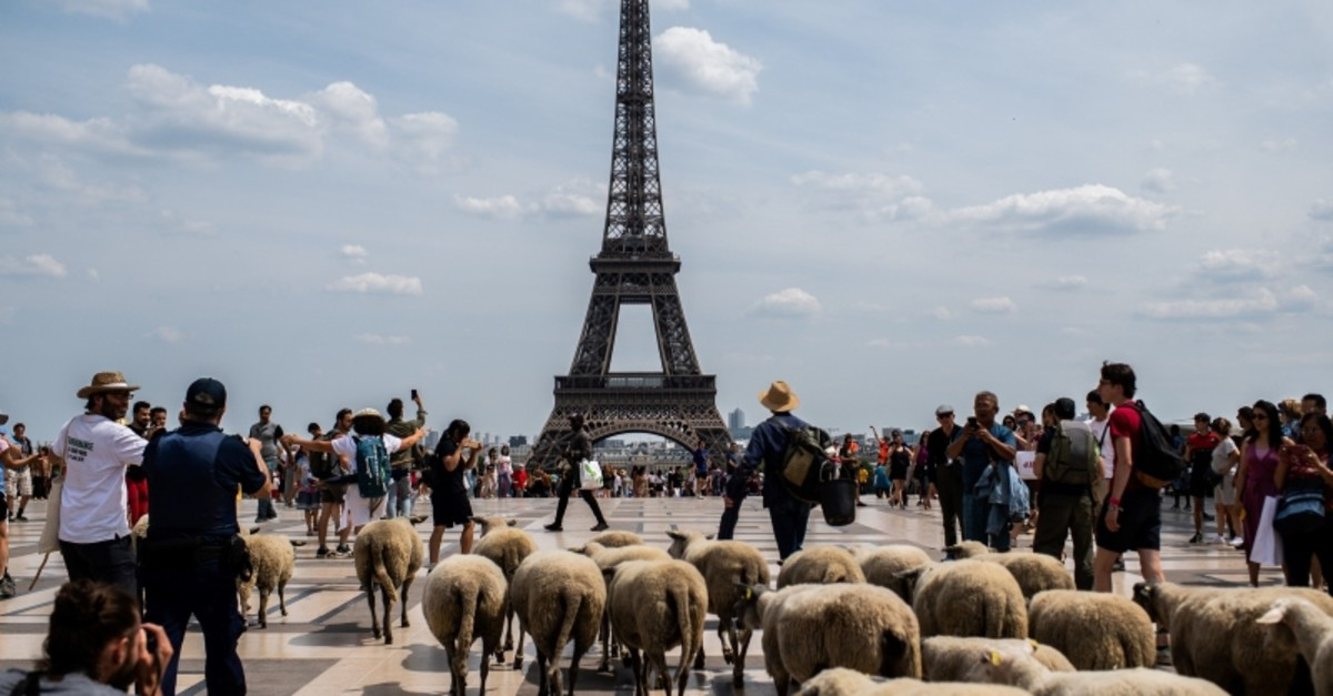 A farmer leads sheep during an urban transhumance in Paris on July, 17 2019 (AFP Photo)