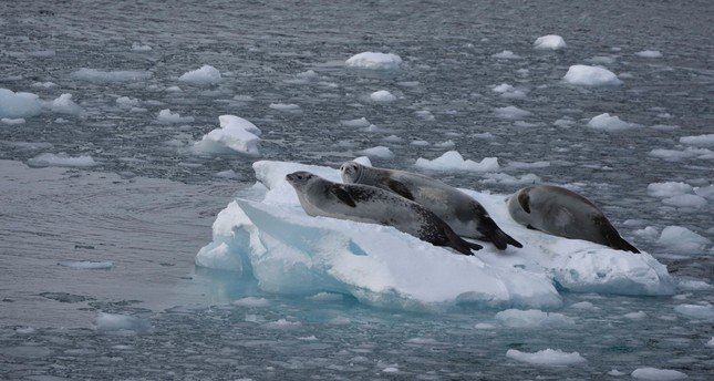 Photos of Antarctica from air, land, sea on display at boat show
