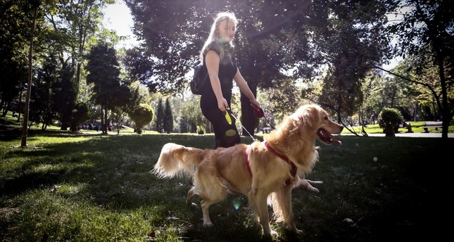 Can't take your pet with you? Online platform offers caregiving for cats, dogs
