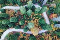 Spider Forests of Gümüşhane weave color into Black Sea region