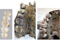 Previously unknown human species' fossils found on Philippine island