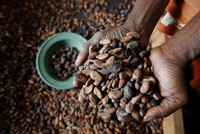 Climate change threatens staple foods
