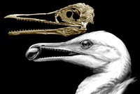 Newly-discovered fossils show early bird had teeth