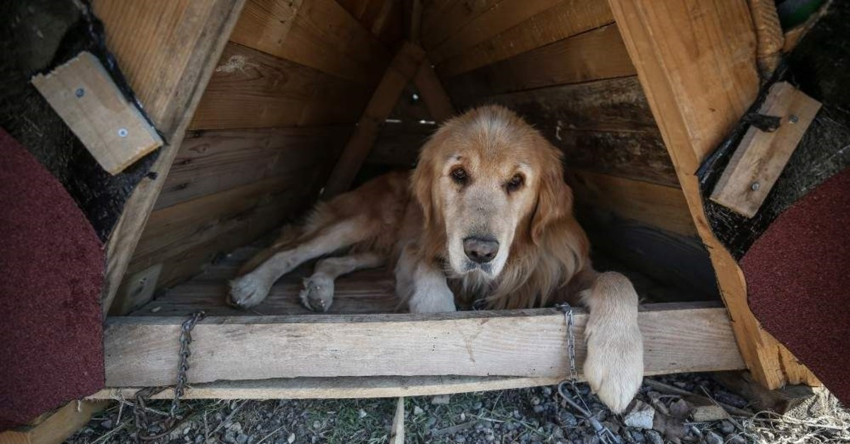 A stray dog getting cozy in his new home in Bursa. (AA Photo)