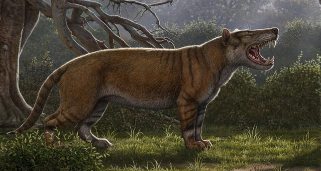 Simbakubwa kutokaafrika, a gigantic mammalian carnivore that lived 22 million years ago in Africa and was larger than a polar bear, is seen in this artist's illustration released in Athens, Ohio, U.S., on April 18, 2019. (Reuters Photo)