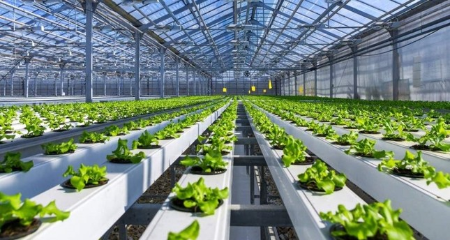 TL 2.4 million investment in pesticide-free smart agriculture