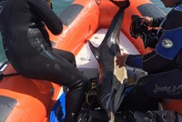 Turkish divers rescue common dolphin in Black Sea