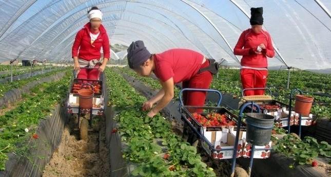 جمعيات مغربية تطالب بحماية العاملات المغربيات من الاستغلال الجنسي في إسبانيا